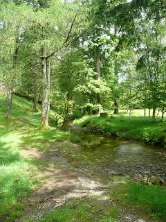 Woods near Yew Tree Tarn