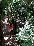 Ziplining in the Jungle - Roatan, Honduras