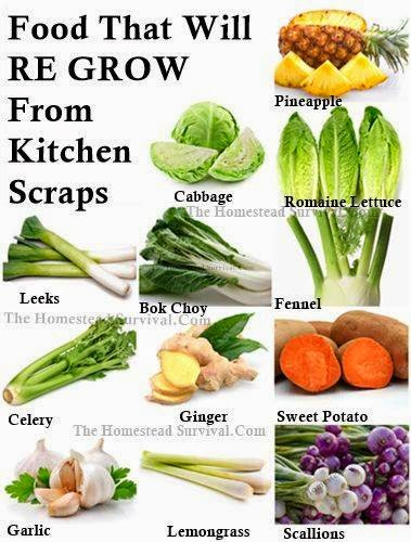 Health Tips: What Are Some Foods That Will Regrow As Scraps ?