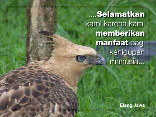 Kampanye Selamatkan Elang Jawa