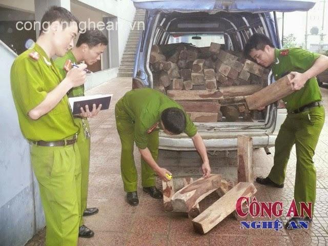 Lực lượng Cảnh sát phòng chống tội phạm về Môi trường tiến hành kiểm đếm số gỗ bị bắt giữ