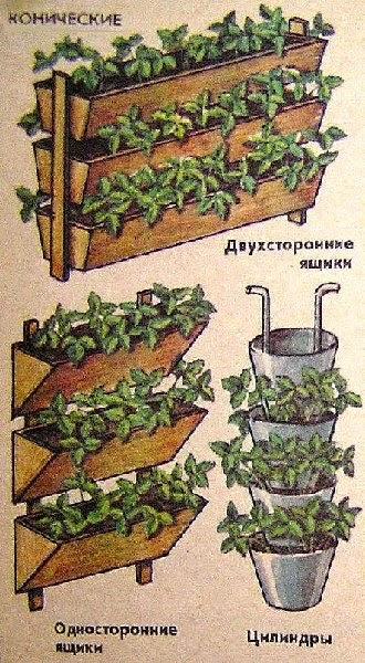 Как сделать грядку для клубники из перегноя - Opalubka-Pekomo.ru