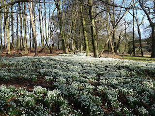 There were thousands of Snowdrops here!!