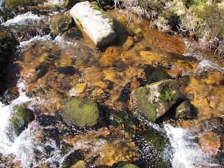 An orange stream!!
