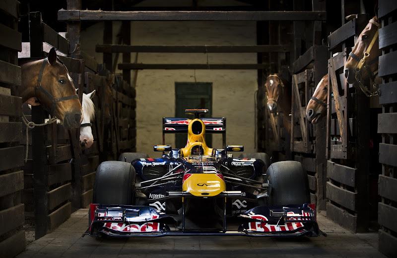 Red Bull в загоне с лошадками в Аргентине