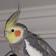 Veli G. avatar