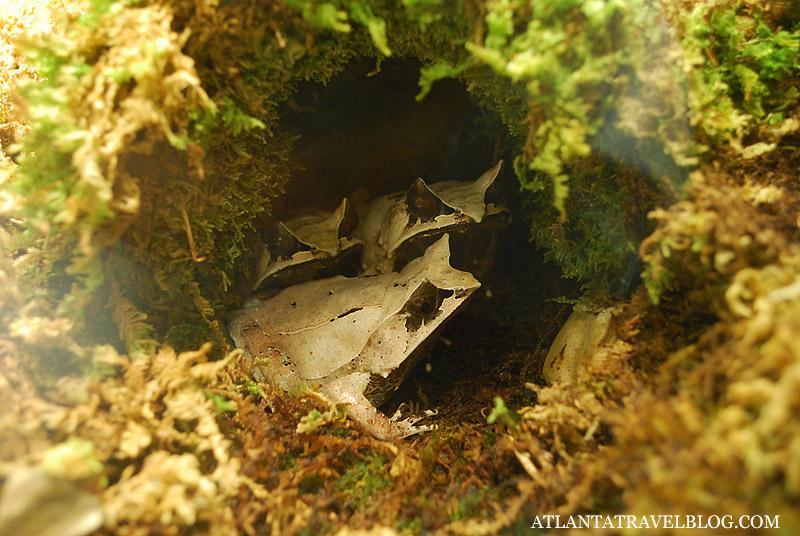 Фото лягушки