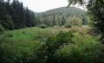 Feuchte Waldwiesen.