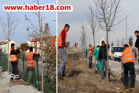 Belediye Çankırı ya 1000 Adet Ihlamur Ağacı Dikiyor
