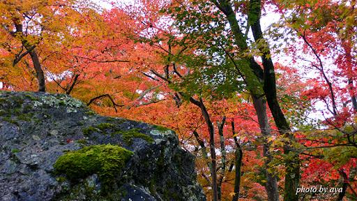 宝厳院 獅子吼の庭 巨岩