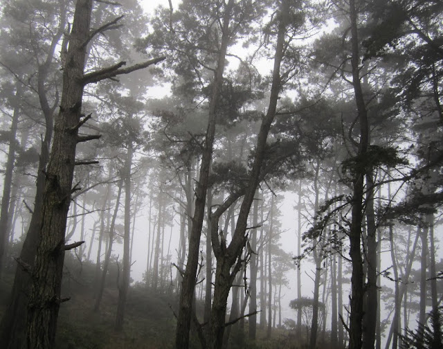 Fog & Trees - Highway 1, California: December 12, 2010 - Mile 4485