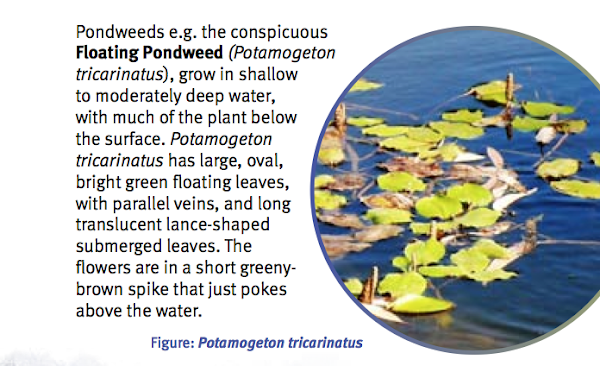 waterplants