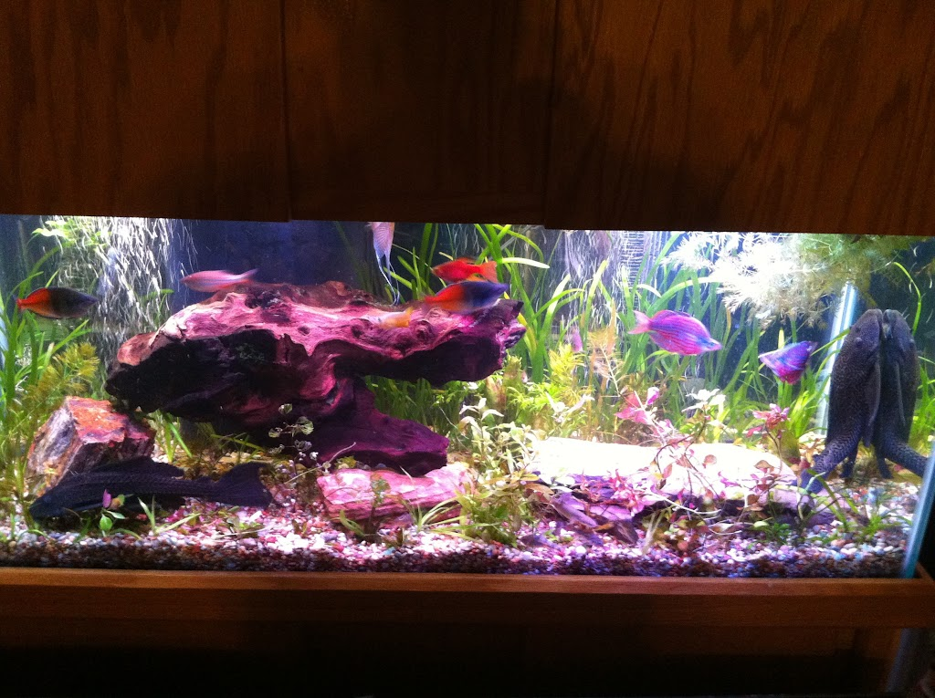 Cell phone pictures of my 75 gallon tank IMAGE_7820A705-F092-4744-9DAB-6875B14B5C7A