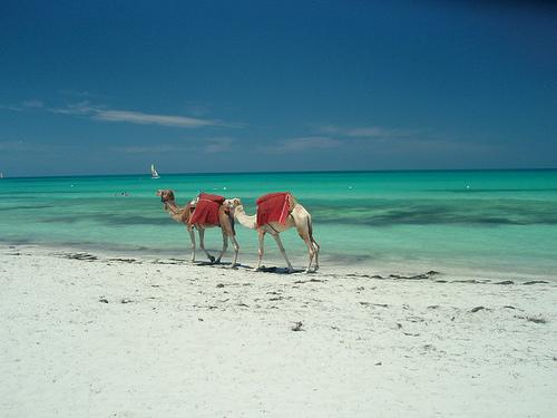 Туры в Тунис из Днепропетровска