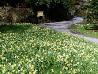Wordsworth's Daffodil Garden at Grasmere