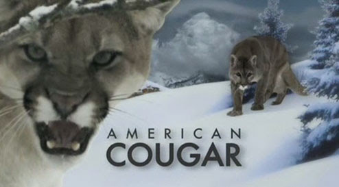 Ameryka?ska puma / American Cougar (2011) PL.TVRip.XviD / Lektor PL