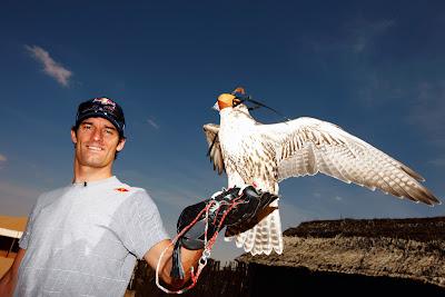 сокол  на руке Марка Уэббера перед Гран-при Абу-Даби 2011