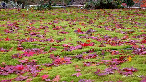 宝厳院 獅子吼の庭 一面の苔