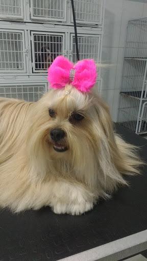 Pet Shop Amigo Bicho, Av. Pará, 27 - Zona 1, Cianorte - PR, 87200-000, Brasil, Loja_de_animais, estado Paraná