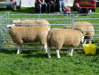 Loweswater Show - Sheep