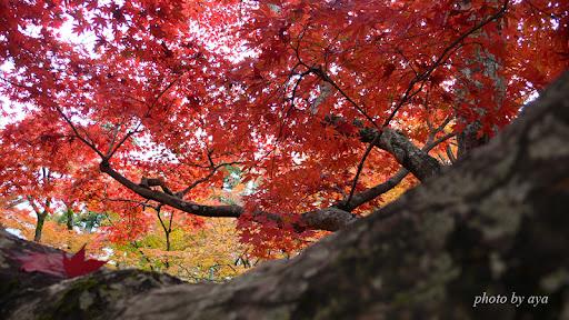 宝厳院の紅葉2
