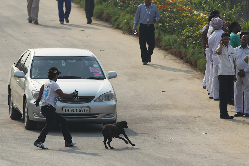 маршал ловит собаку на трассе Буддх во время свободных заездов на Гран-при Индии 2011