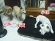 小黃和小花都是15歲的女生,小田則為10歲的男生。