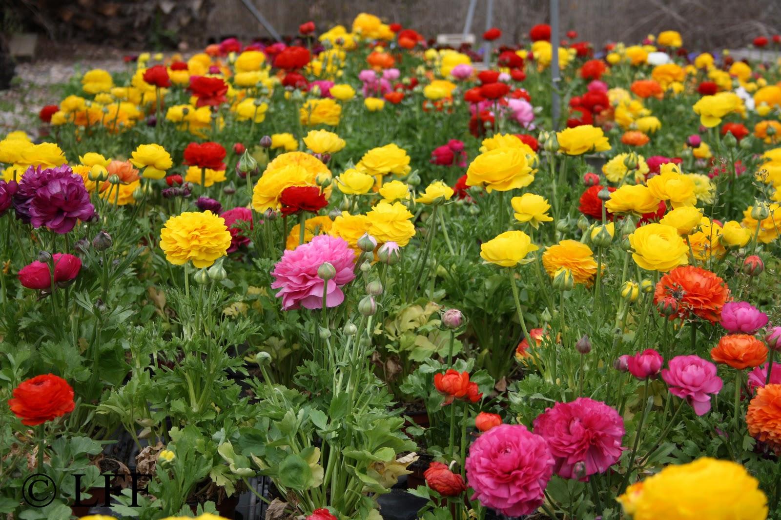 Fotos de flores de floriculturas 53