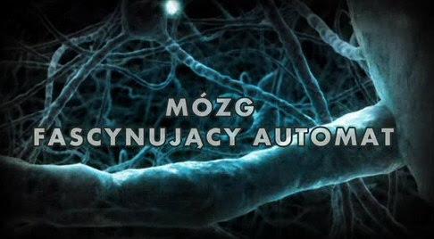 Mózg, fascynuj±cy automat / Sjael & Videnskab (2012) PL.TVRip.XviD / Lektor PL
