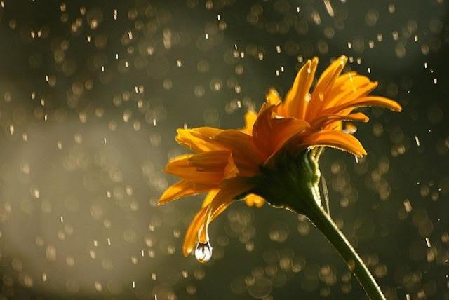 Flowers in Rainy Season Seen On www.coolpicturegallery.us