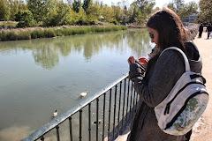 Twitter debe saber que hemos encontrado patos