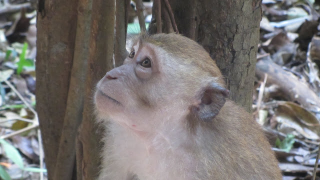One of Railay's resident monkeys.