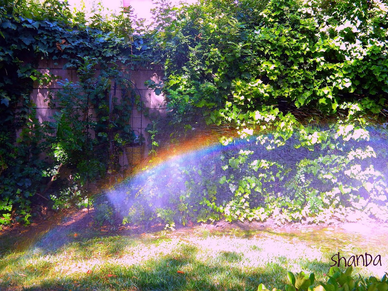 Sprinkler Rainbow and Backyard Blessings