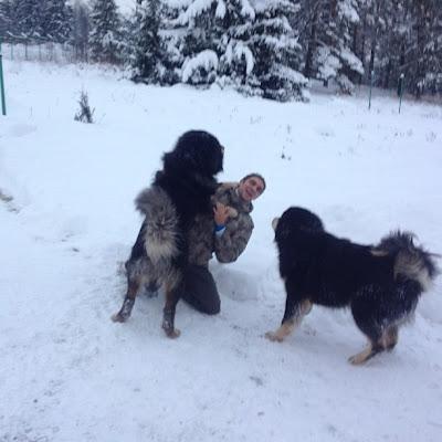Виталий Петров со своими собаками 9 декабря 2012