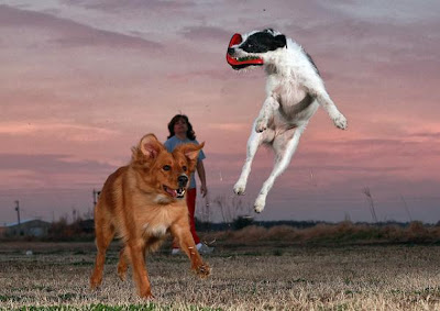 Flying Dogs Catching Frisbees Seen On www.coolpicturegallery.us
