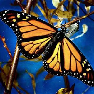 Mariposa que salió de su capullo