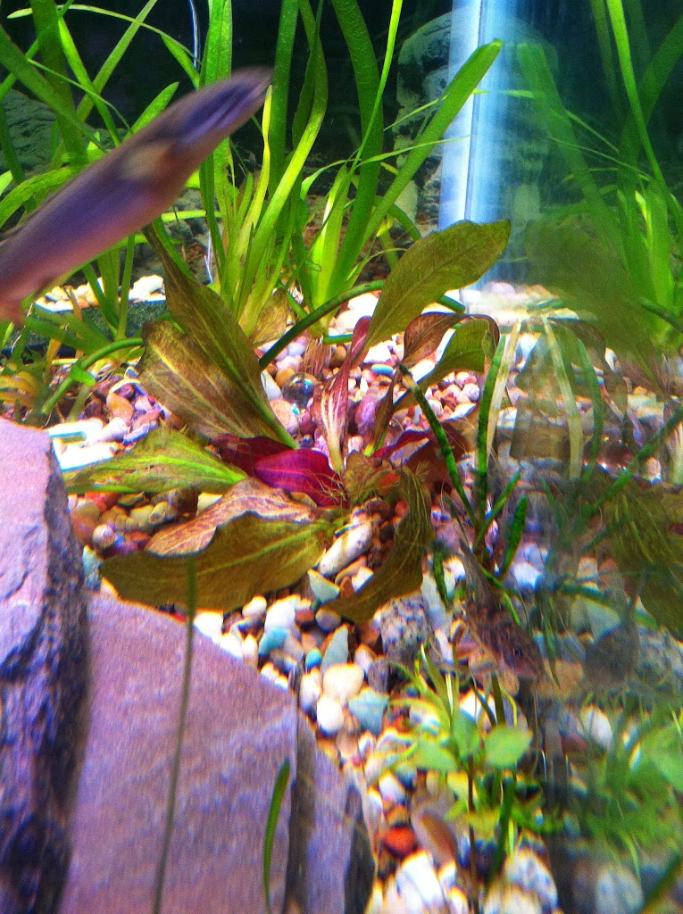 Cell phone pictures of my 75 gallon tank IMAGE_2C66ED18-391B-4B3B-943D-4B385D720940