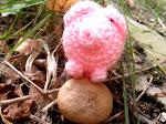 Das Haekelschwein versucht sich als Trüffelschwein (erfolglos)