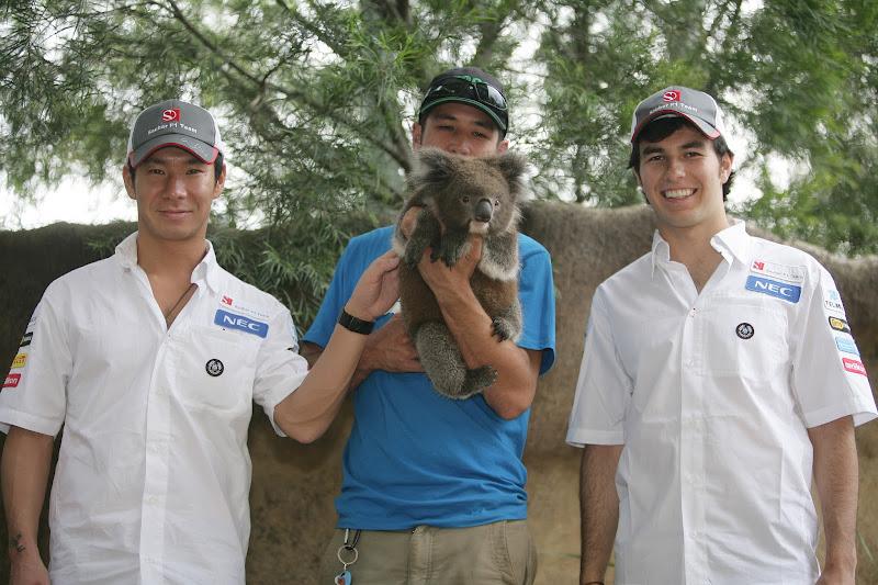 Камуи Кобаяши и Серхио Перес с коалой в мельбурнском зоопарке перед Гран-при Австралии 2012