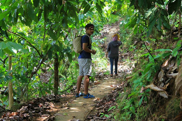 jalan setapak di bawah pohon kakao menuju gunung pembarungan