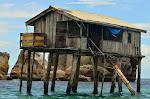 Domek rybacki u brzegu Bird Island.