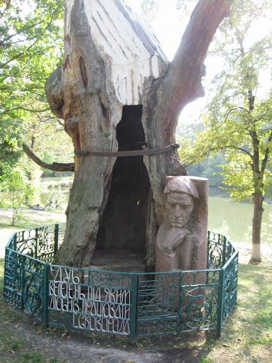 дуб великан в парке сковороды