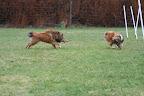 De er lige til rovdyr-afdeldingen i en zoo... :-)