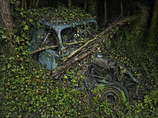 Old Cars Reclaimed by Nature