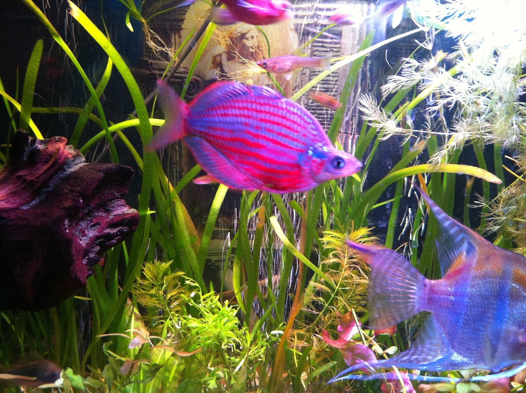 Cell phone pictures of my 75 gallon tank IMAGE_E478DBDA-C262-4433-B5BA-71A15C291886