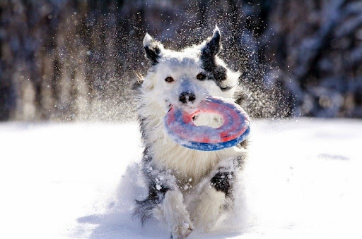Winter Holiday Hazards For Pets