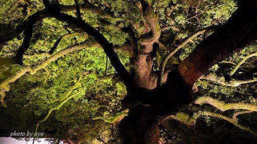 青蓮院門跡のライトアップ4