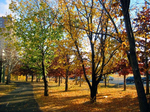 leaves on Athllon drive