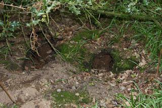 A foxs den