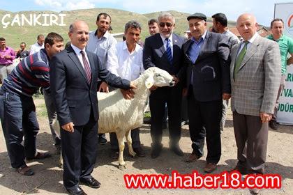 Çankırı'da 70 Koç Dağıtıldı